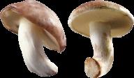 little fresh mushroom free download png