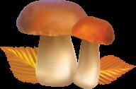 little mushroom clipart free download pngmushroom_PNG3222