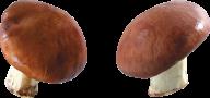 little mushroom free download png