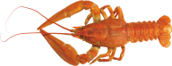 Lobster PNG Free Download 11