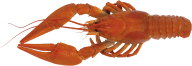 Lobster PNG Free Download 12
