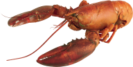 Lobster PNG Free Download 14