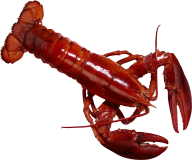 Lobster PNG Free Download 17