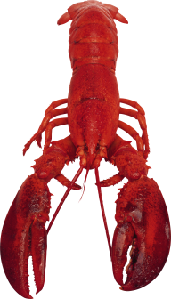 Lobster PNG Free Download 18