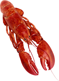 Lobster PNG Free Download 2