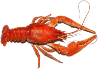 Lobster PNG Free Download 23