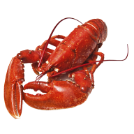 Lobster PNG Free Download 26