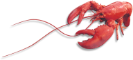 Lobster PNG Free Download 27
