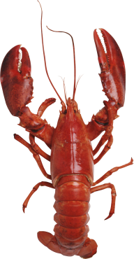 Lobster PNG Free Download 3