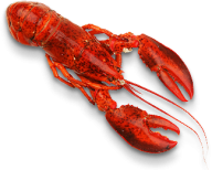 Lobster PNG Free Download 30