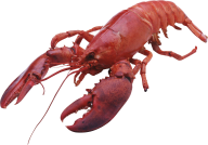 Lobster PNG Free Download 5
