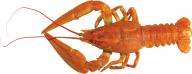 Lobster PNG Free Download 7