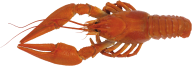 Lobster PNG Free Download 8