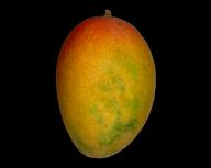 Mango PNG Free Download 12