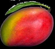 Mango PNG Free Download 13