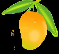 Mango PNG Free Download 18