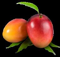 Mango PNG Free Download 24