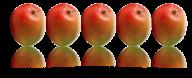 Mango PNG Free Download 25