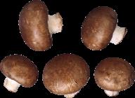 mushroom buts  free download png