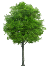 Neem Tree Png Free Download