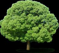 Neem Tree Png