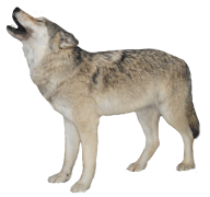 noising wolf free png download