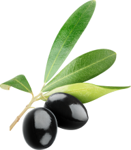 Olives PNG Free Download 10