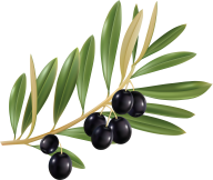 Olives PNG Free Download 12