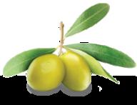 Olives PNG Free Download 18