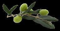Olives PNG Free Download 22