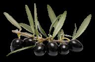 Olives PNG Free Download 24
