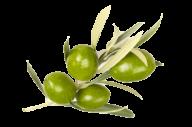 Olives PNG Free Download 25
