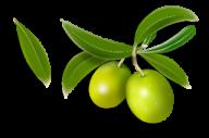 Olives PNG Free Download 26