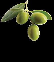 Olives PNG Free Download 27