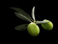 Olives PNG Free Download 29
