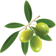 Olives PNG Free Download 3