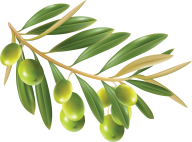 Olives PNG Free Download 4