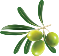 Olives PNG Free Download 5