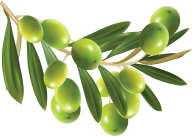 Olives PNG Free Download 7