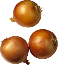Onion PNG Free Download 1