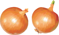 Onion PNG Free Download 11