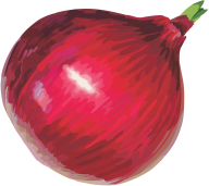 Onion PNG Free Download 12