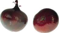 Onion PNG Free Download 13