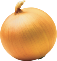 Onion PNG Free Download 16
