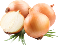 Onion PNG Free Download 5