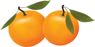 Orange PNG Free Download 11