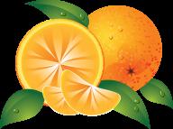 Orange PNG Free Download 13