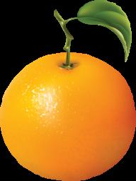 Orange PNG Free Download 18