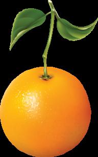 Orange PNG Free Download 19