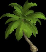 PalmTree PNG Free Download 10